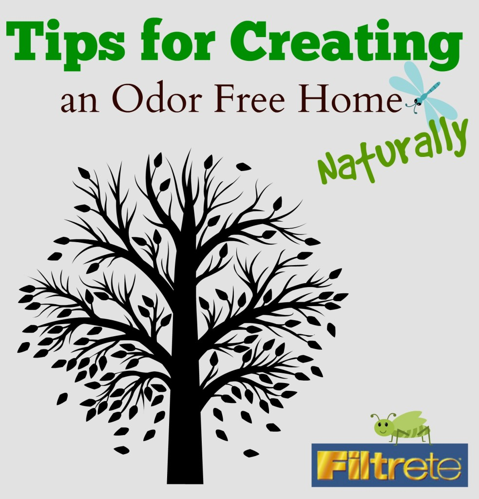 Tips for Creating an Odor Free Home Naturally