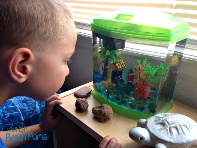 Start with just one fish from petsmart crunchy beach mama for How much are fish at petsmart