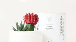 Haworthia and Red Grafted Cacti